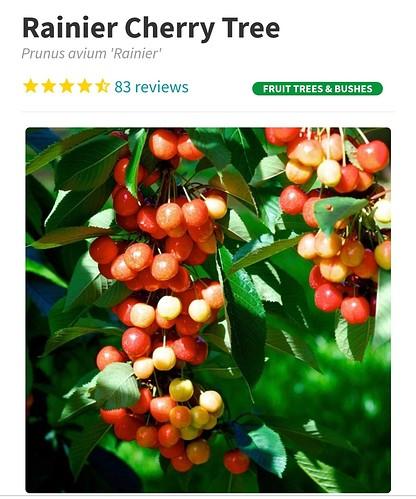 Screenshot_2021-06-11-15-12-04-881_com.android.chrome
